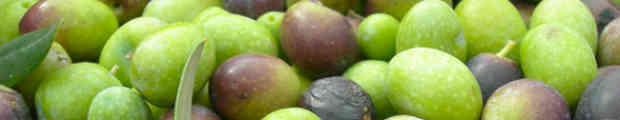 Una storia delle olive
