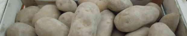 Gnocchi di patate con porri e prescinsêua
