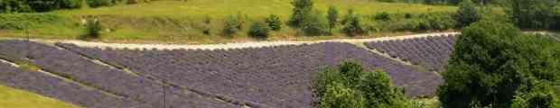 La mietitura e lo spirito del grano